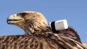 Darshan with Sony camera
